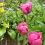 Spring_mingle
