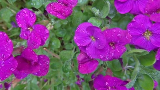 A drop of rain.