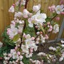 Dsc00298blossomedited_blossom_2