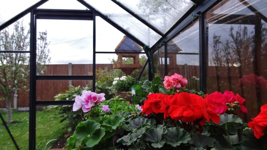 Greenhouse full of plants ready to plant out.