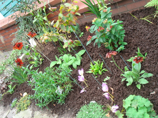 Another newly planted border - Oct 2007
