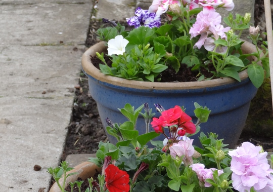 Planted flowers in pots.