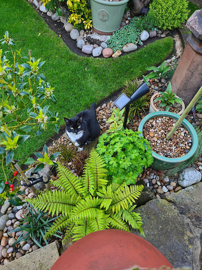 Eve, yesterday evening..pottering around the garden with me.