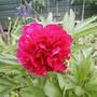 Nice red flower.