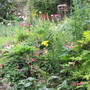 My Back Garden today