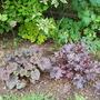 Heuchera corner Marvelous Marble on left Black Beauty on the right and Lime Marmalade under shrubs