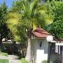 Update on Majesty Palm. (Ravenea rivularis)