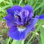 Iris Kaboom (Iris)