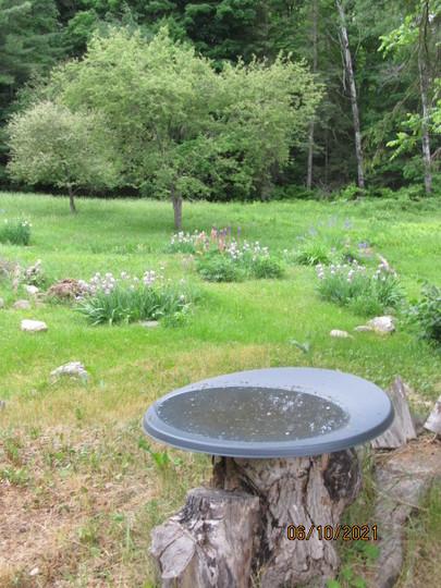 satellite dish bird bath