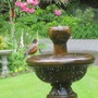 American Robin at our foutain