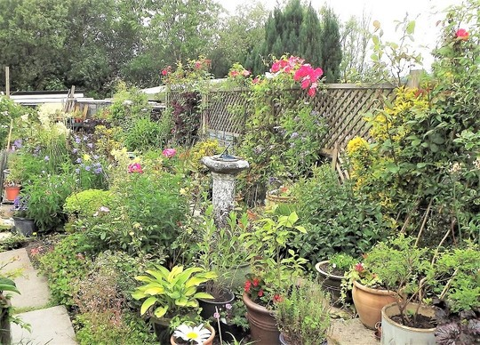 Right side of garden - looking down.