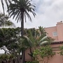 Palms and Weeping Fig (Ficus benjaminina)