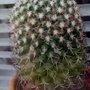 Cactus in kitchen window from outside 25th June 2021 001
