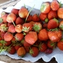 Strawberries  fresh from the garden