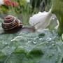 After the storm the snails crawled out.