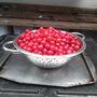 cherrys picked