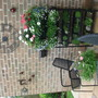 turned old shoe rack into planter chained to wall so its safe