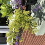 Nepeta & lady's mantle bouquet