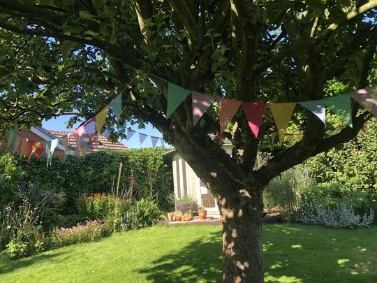 Bunting in Apple tree