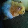 22nd July Hamster leaves me for hamster heaven