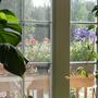Porch plants through window
