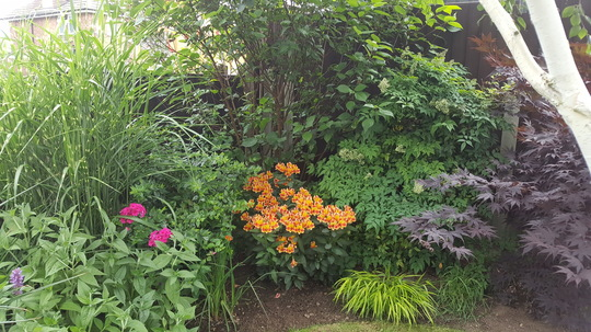 Bottom right corner of garden with Alstroe Indian Summer (for Anget)