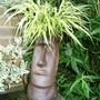 Head (Hakonechloa macra (aureola))