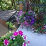 Annuals on the deck.