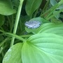 A Little tree frog (I think)