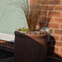Ornamental grass newly planted up.