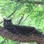 Rufus in the walnut tree