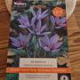 Crocus Sativus (Crocus sativus (Saffron Crocus))