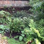 The Fernery.