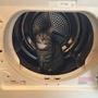 Boo in the dryer...