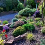 Front rockery area  this morning...these shrubs are 2 years old and beginning to mature a little.