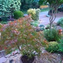View from front door.Acer slowing colouring up.
