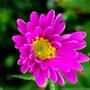 Pretty pink flowering plant.