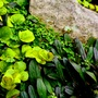 Tapestry of tiny plants.