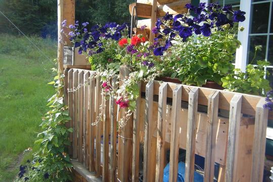 Porch Rail and Runner Bean