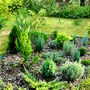 New conifer bed.