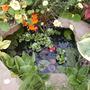Pond_august_2008