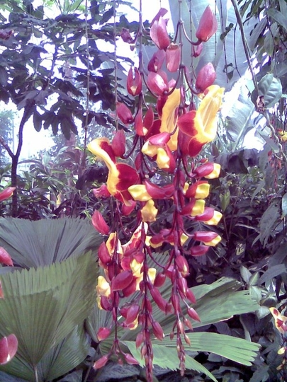 RHS_Wisley_Tropical_plants.jpg
