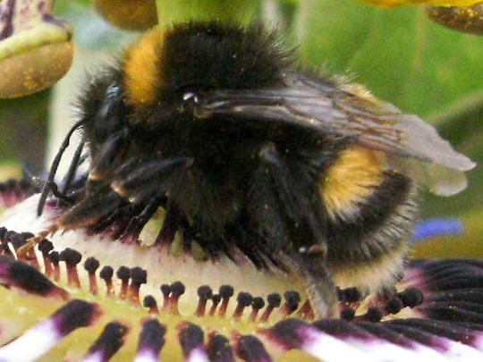 Mr Big Bee :)
