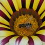 2008_0816aug15_aug170170
