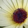 2008_0816aug15_aug170154