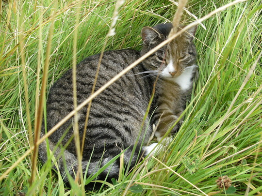 Sox Snoozing In Long Grass Area