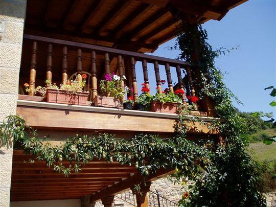 Passiflora on balcony