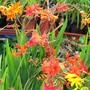 Close up of a few plants
