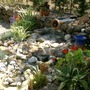 Natural pool (agaves, irises, blue grass)