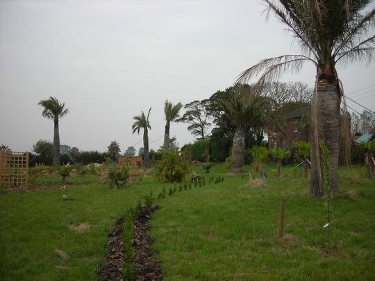 Start of the garden (Various palms)